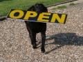 dog-open